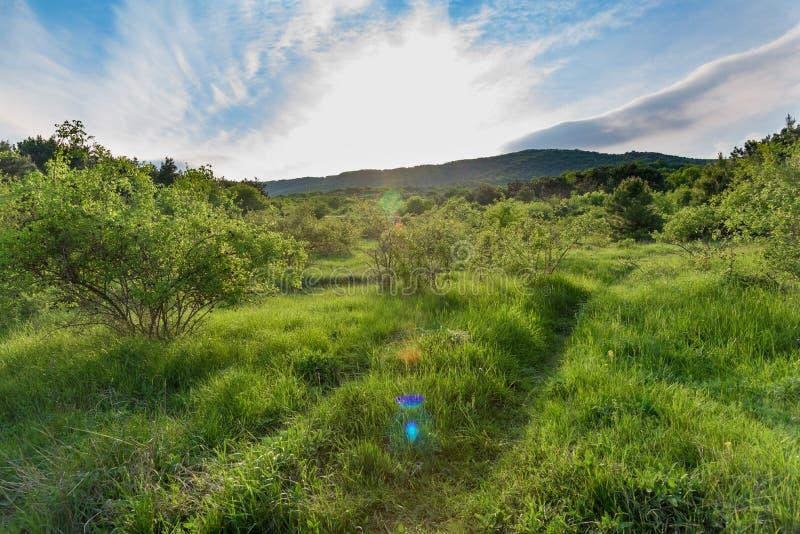 Krajobraz, zmierzch droga w polu zdjęcie stock