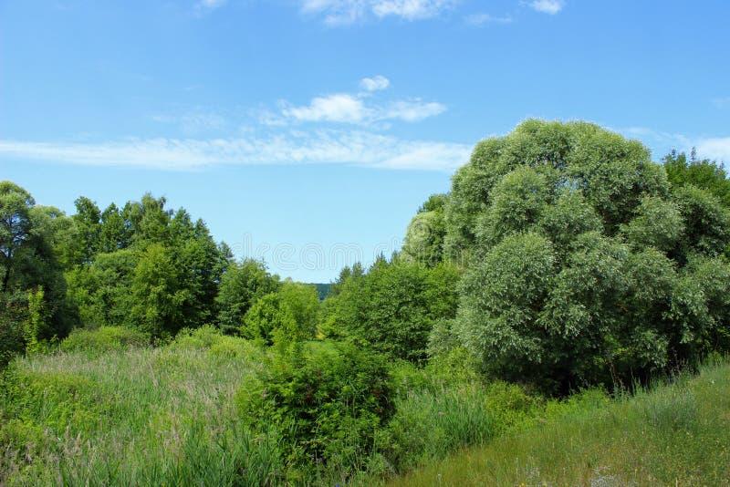 Krajobrazowa fotografia Zielony pole, chmury I niebieskie niebo -, Natura, ekologia, podr??y poj?cie zdjęcia stock