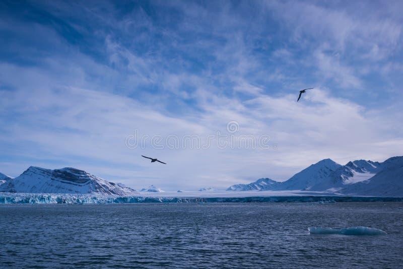Krajobrazowa lodowa natura lodowiec góry Spitsbergen Longyearbyen Svalbard arktycznego oceanu zimy dnia zmierzchu biegunowy niebo obraz stock
