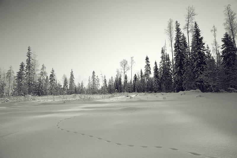 krajobrazowa monochromatyczna zima obraz royalty free
