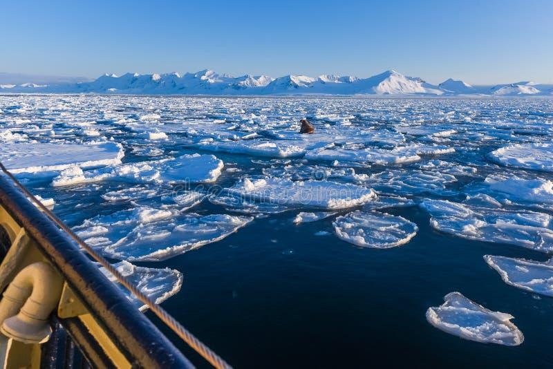 Krajobrazowa natura góry Spitsbergen Longyearbyen Svalbard arktycznego oceanu zimy dnia biegunowy zmierzch zdjęcie stock