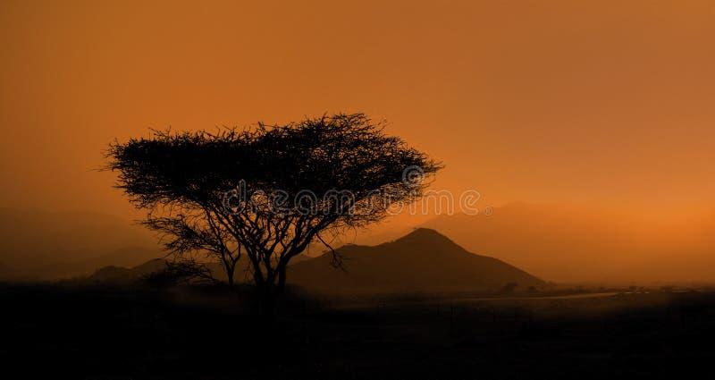 krajobrazowa sawanna obraz royalty free