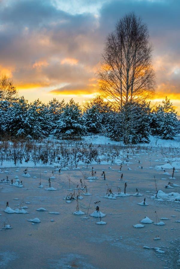 krajobrazowa sceniczna zimy zdjęcia royalty free