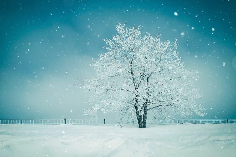 krajobrazowa sceniczna zimy obraz royalty free