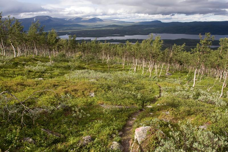 krajobrazowa tundra fotografia stock
