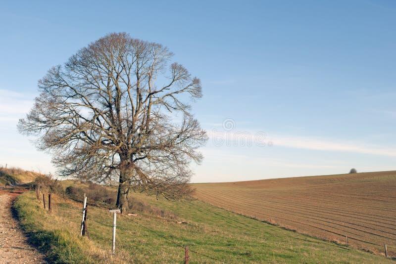 krajobrazowa wiejska zima zdjęcie royalty free