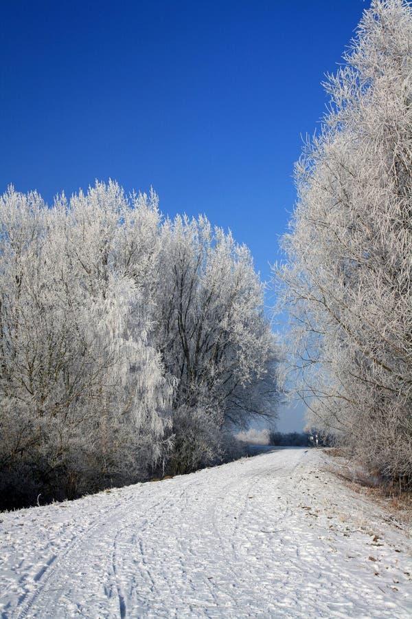 krajobrazowa zima obrazy royalty free