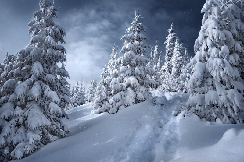 Download Krajobrazowa zima obraz stock. Obraz złożonej z podwyżka - 13342289