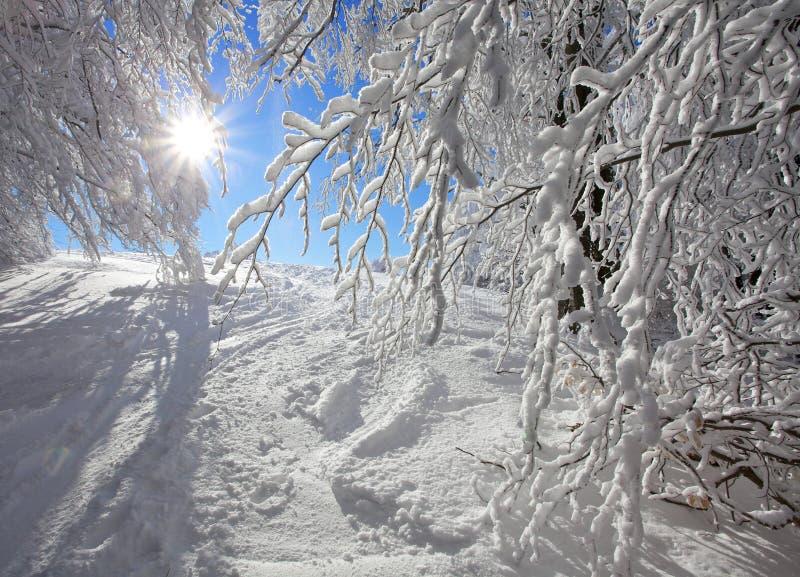 krajobrazowa zima obraz royalty free
