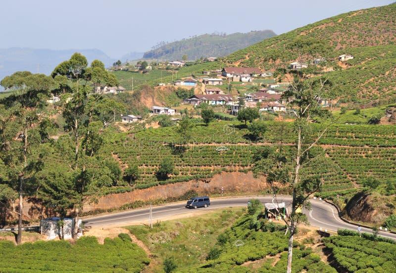 Download Krajobrazowe Górnicze Plantacje Herbaciane Zdjęcie Stock - Obraz złożonej z nieruchomości, greenbacks: 53784000