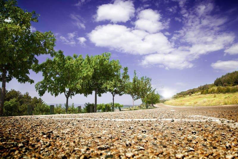 krajobrazowi drogowi drzewa fotografia stock
