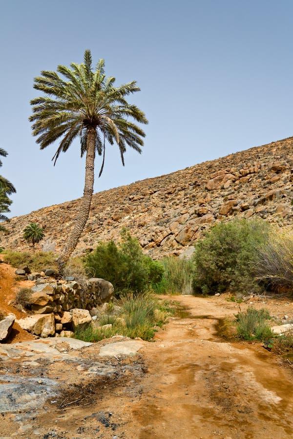 krajobrazowi drzewka palmowe obraz stock