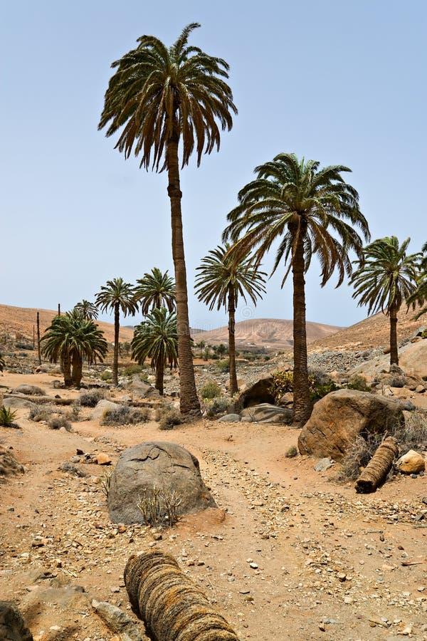 krajobrazowi drzewka palmowe zdjęcia royalty free