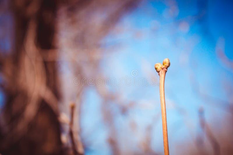 Krajobrazowi natura kwiaty zdjęcia royalty free