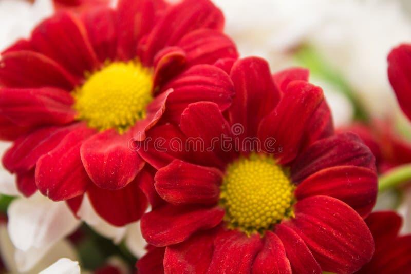 Krajobrazowi natura kwiaty zdjęcia stock