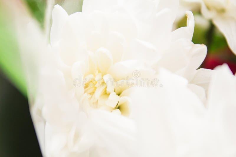 Krajobrazowi natura kwiaty obrazy stock