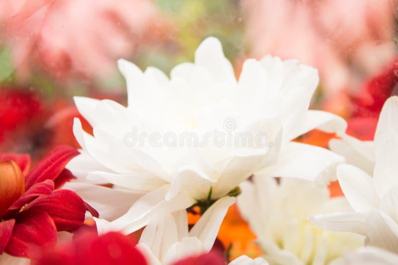 Krajobrazowi natura kwiaty zdjęcie royalty free