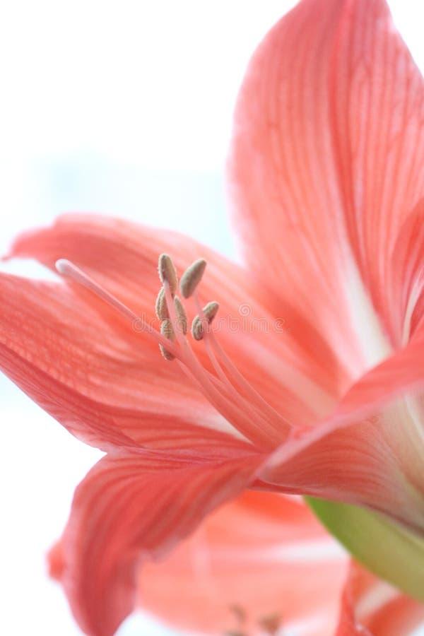 Krajobrazowi natura kwiaty fotografia royalty free