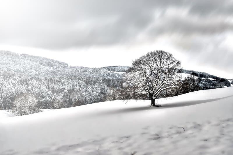 krajobrazowy śnieżny drzewo zdjęcia royalty free