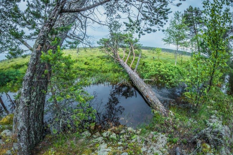 Krajobrazowy grąz bagno w wieczór wykoślawienia fisheye perspektywiczny obiektyw obraz royalty free