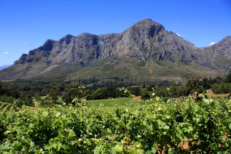 krajobrazowy halny winnica fotografia stock