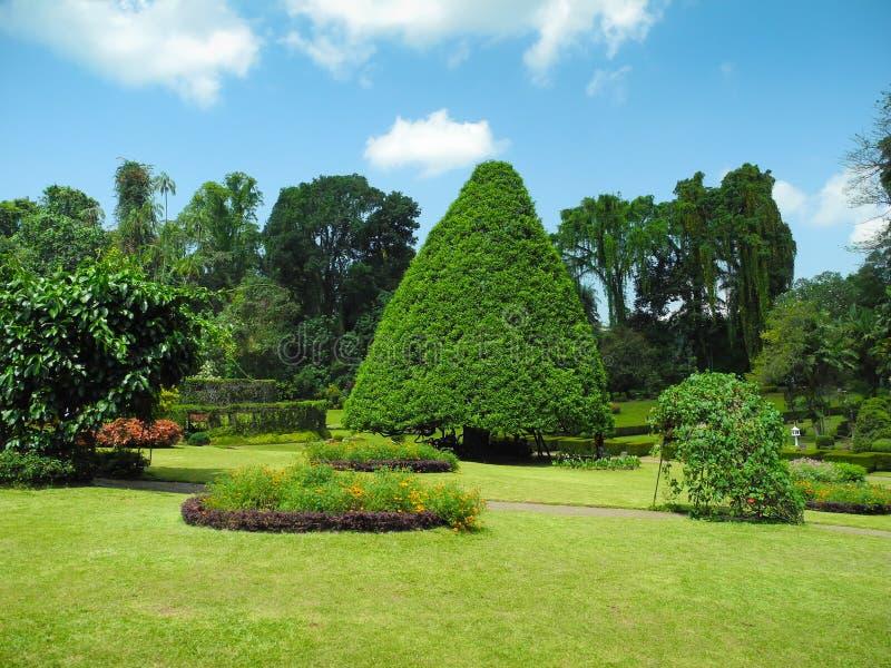 krajobrazowy ogród botaniczny peradeniya obrazy stock