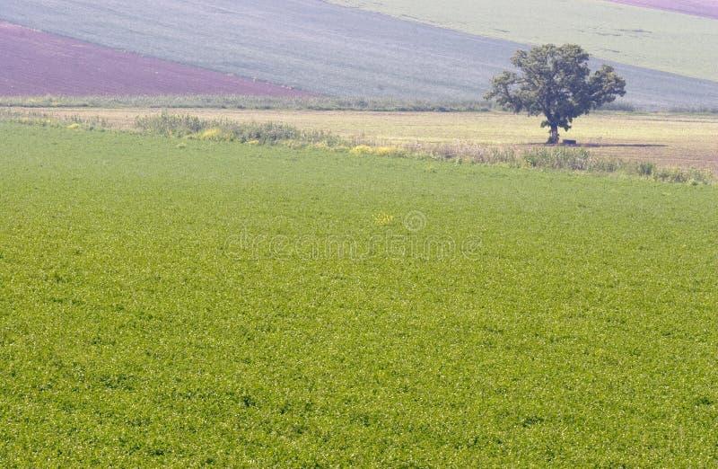Krajobrazowy osamotniony drzewo zdjęcie stock