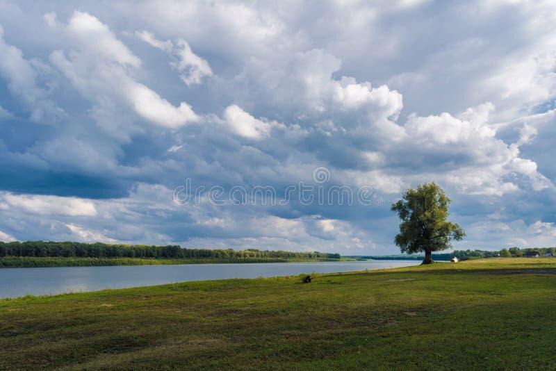 Krajobrazowy osamotniony trwanie drzewo 1 zdjęcia royalty free