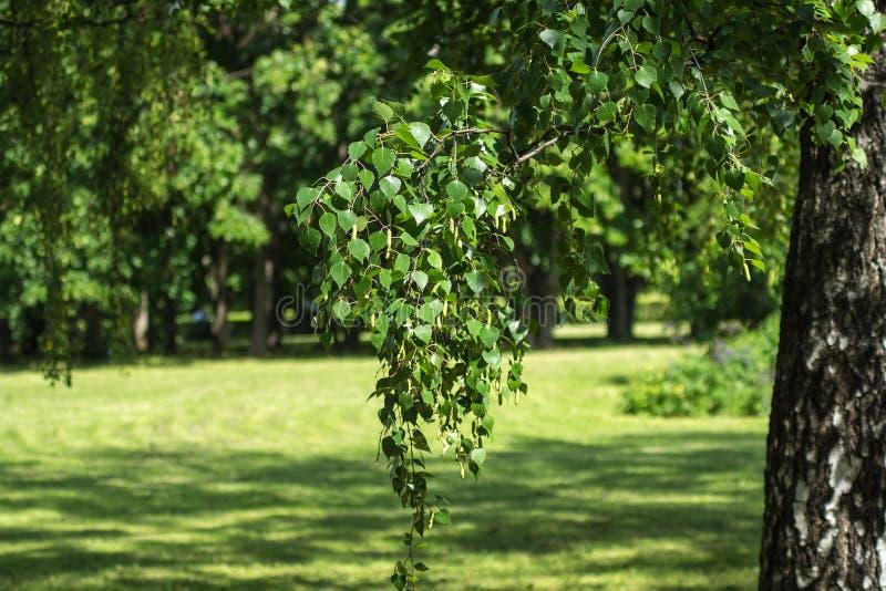 krajobrazowy parkowy lato zdjęcia stock