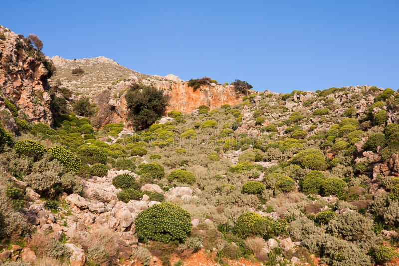 krajobrazowy phrygana obraz stock