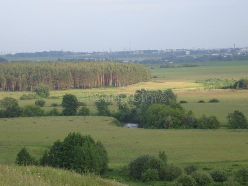 Krajobrazowy przegapiający sosna las i rzekę obrazy royalty free