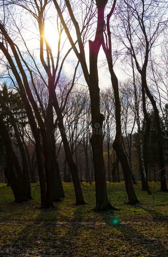 Krajobrazowy słońce przez drzew obraz stock