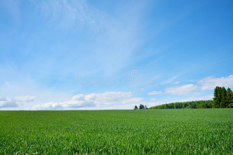 Krajobrazowy sceneria widok z zielonymi łąkami i niebieskim niebem na letnim dniu na poświadczającym klimatycznym zdrowie kurorci zdjęcia stock
