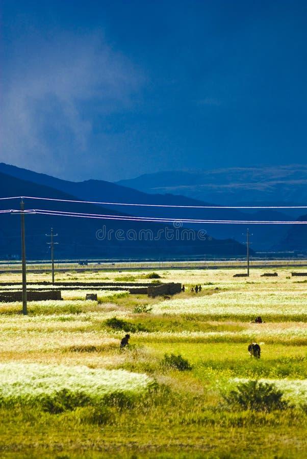 krajobrazowy tibetan zdjęcia stock