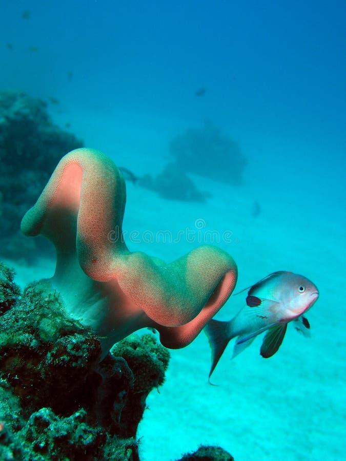 krajobrazowy underwater fotografia royalty free