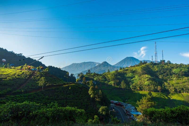 Krajobrazowy widok herbaciana plantacja obraz royalty free