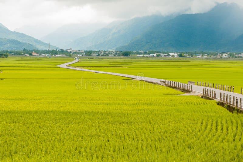 Krajobrazowy widok Piękni Rice pola Przy Brown aleją Chishang, Taitung, Tajwański Dojrzały złoty ryżowy ucho) fotografia stock
