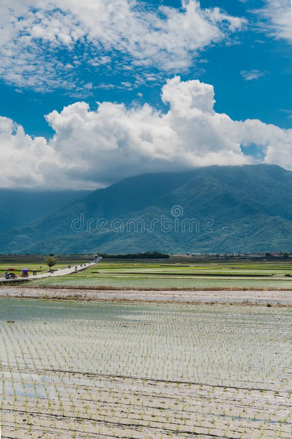 Krajobrazowy widok Piękni Rice pola Przy Brown aleją, Chishang, Taitung, Tajwan obrazy royalty free