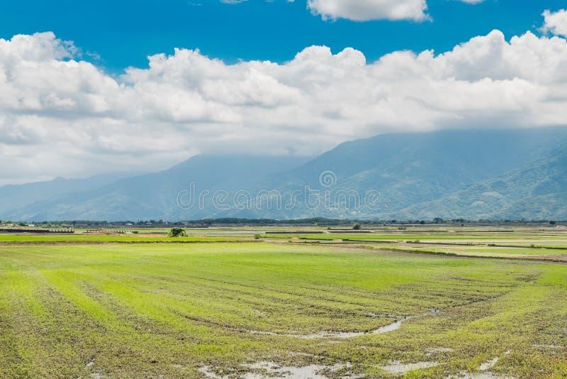 Krajobrazowy widok Piękni Rice pola Przy Brown aleją, Chishang, Taitung, Tajwan obraz royalty free