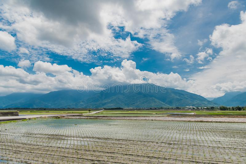 Krajobrazowy widok Piękni Rice pola Przy Brown aleją, Chishang, Taitung, Tajwan zdjęcia royalty free