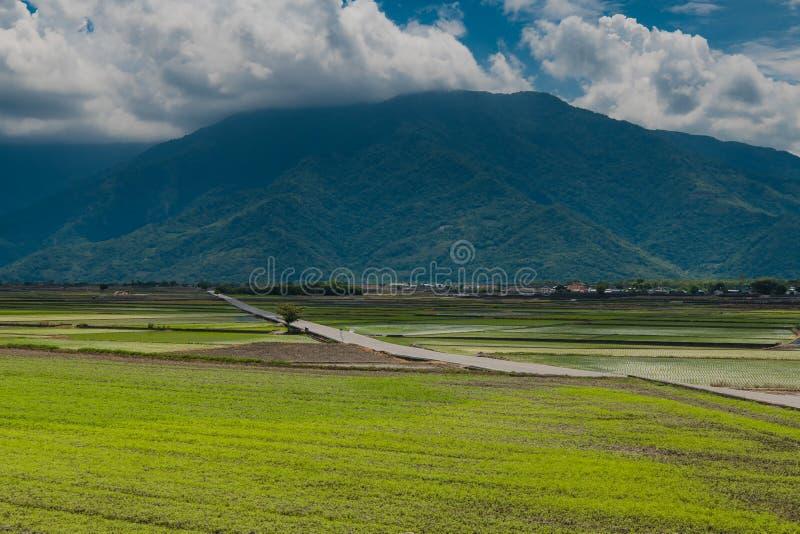 Krajobrazowy widok Piękni Rice pola Przy Brown aleją, Chishang, Taitung, Tajwan fotografia royalty free