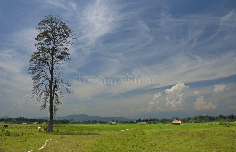 Krajobrazowy widok pola przy Assam, Arunachal Pradesh granica, Assam, India zdjęcia stock