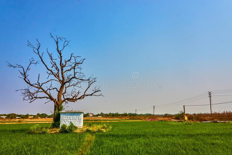 Krajobrazowy widok Rolniczy pole zdjęcie stock