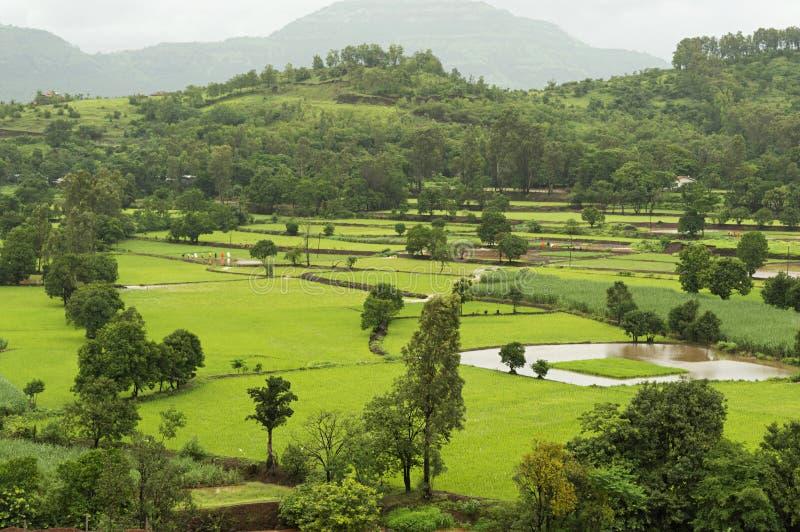 Krajobrazowy widok ryż uprawia ziemię blisko Mulshi tamy, Pune fotografia stock