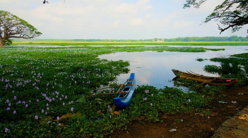 Krajobrazowy widok Tissa jezioro z lotosowymi kwiatami przy Tissamaharama i drzewami, Sri Lanka obrazy royalty free