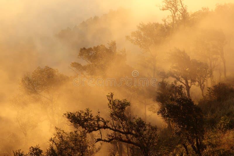 Krajobrazowy widok tropikalny las deszczowy w mgle przy rankiem na górze, Doi zdjęcia stock