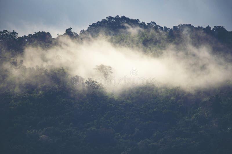 Krajobrazowy widok tropikalny las tropikalny, natury scena zdjęcia royalty free