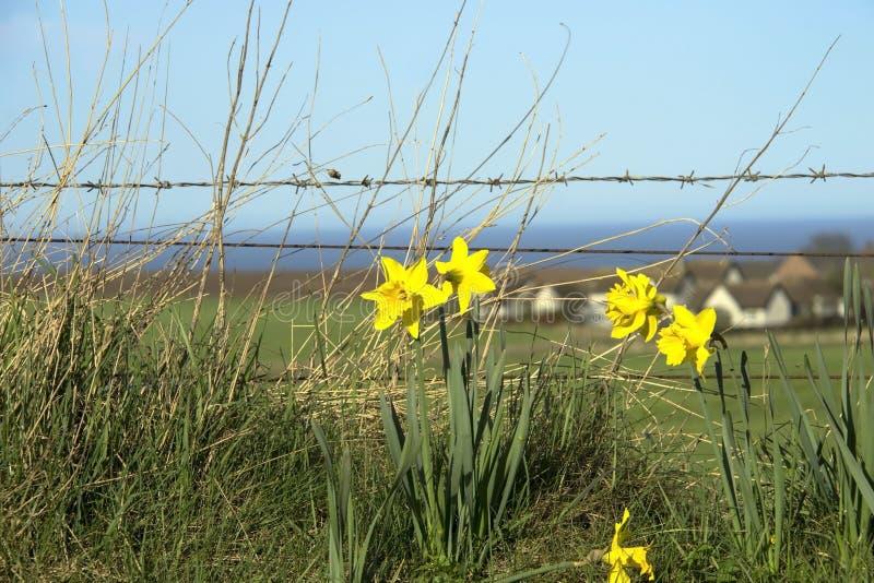 krajobrazowy wiejski scottish Aberdeenshire, Szkocja, UK obrazy stock