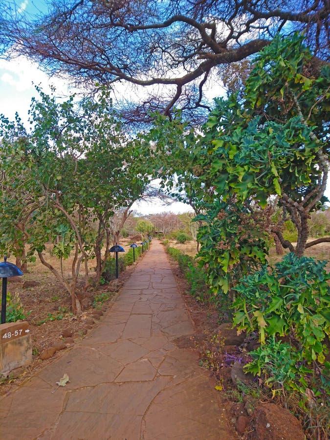 Krajobrazowy wizerunek natury ścieżka zdjęcia stock