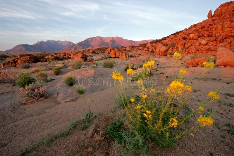 krajobrazu pustyni Namibia zdjęcie stock
